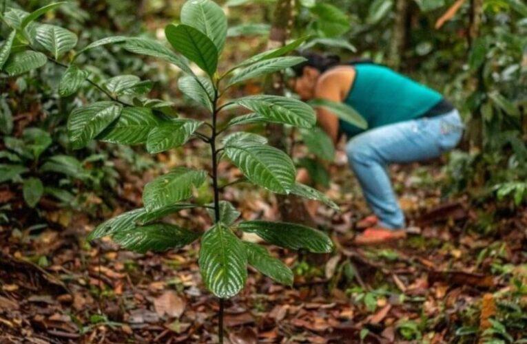 """""""Loving al planeta"""" 1000 árboles la contribución de la marca Nosotras para la reforestación del Amazonas"""